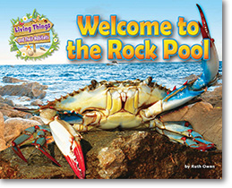 Welcome to the Rock Pool