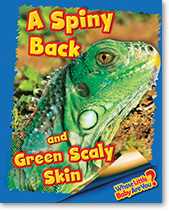 A Spiny Back and Green Scaly Skin (Iguana)
