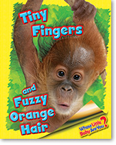 Tiny Fingers and Fuzzy Orange Hair (Orangutan)