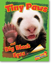Tiny Paws and Big Black Eyes (Giant Panda)