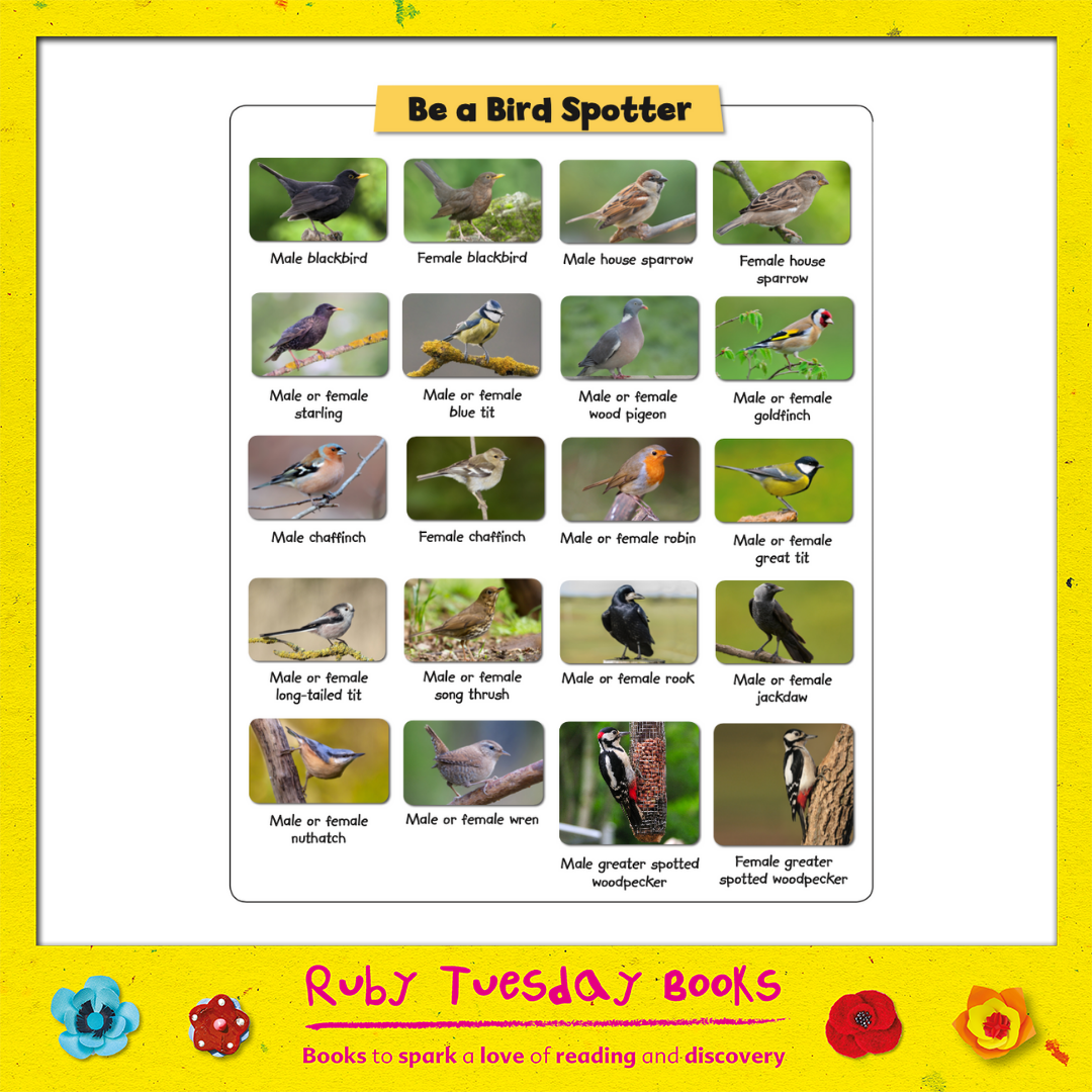Mr Green Free Resources - Be a Bird Spotter