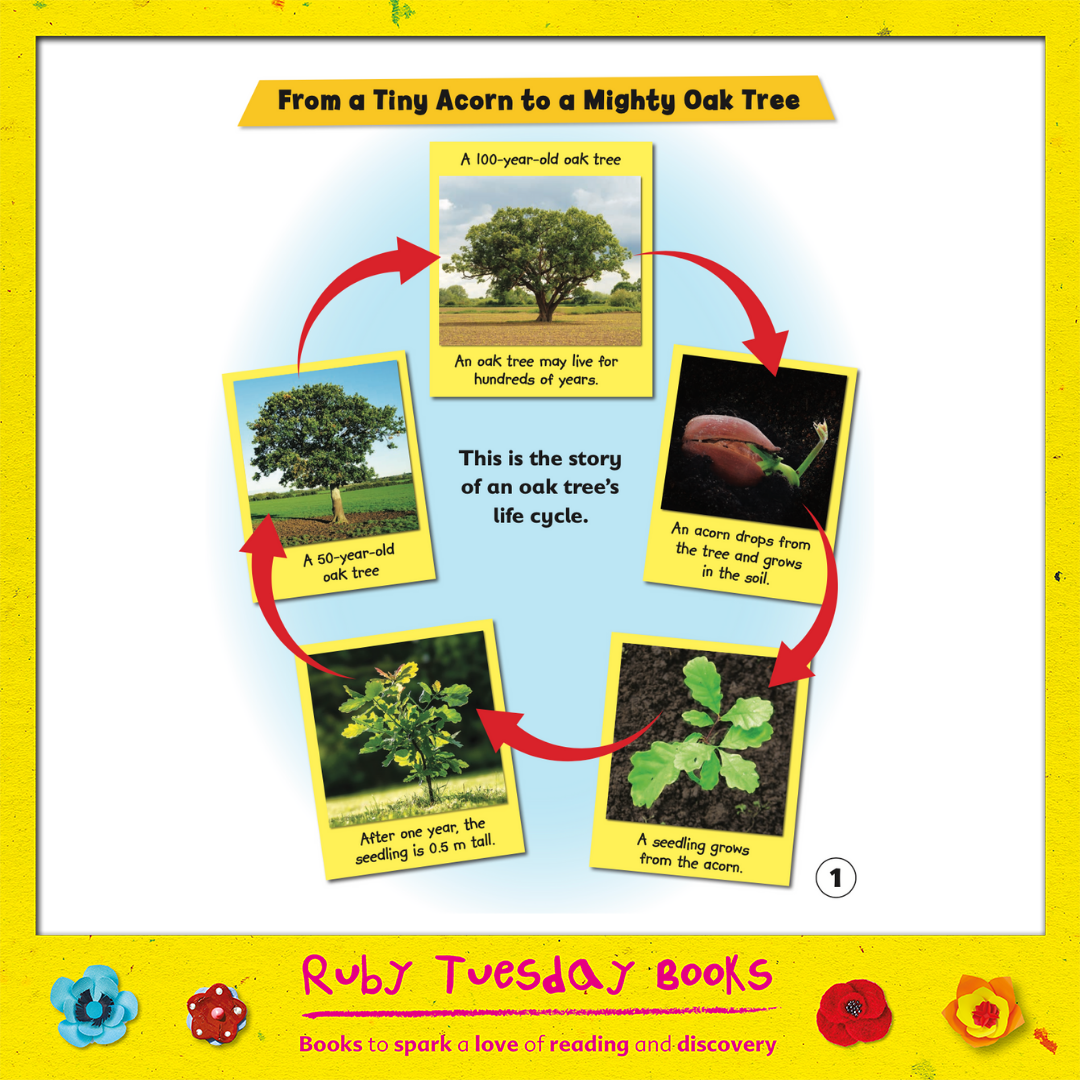Mr Green Free Resources - From a Tiny Acorn to a Massive Oak